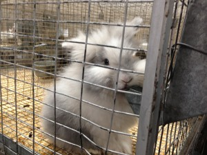 The original bugs bunny